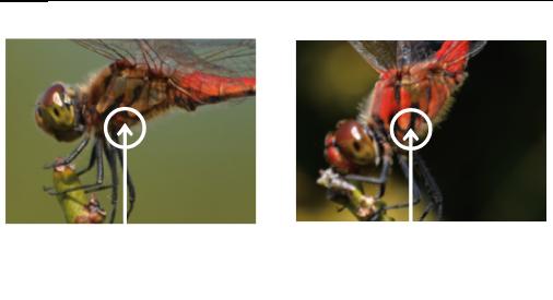 アキアカネ:腹部だけが赤く黒い線がとがっている。 ナツアカネ: 胸部も赤く黒い線が角ばっている