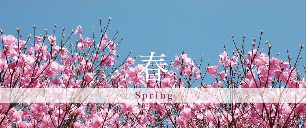 The Four Seasons of Mt. Gozaisho: Spring