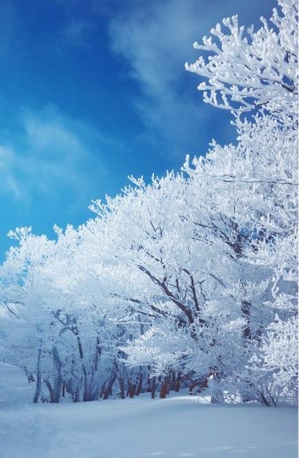 山頂から私に届く、雪あかり | winter campaign